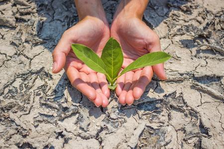sequias: La plantaci�n de �rboles para mitigar la sequ�a.