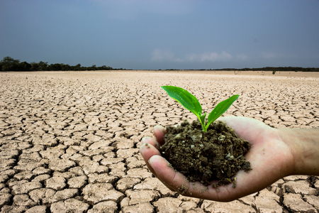 Ground caused by water shortages.Planting trees to mitigate drought Stock Photo