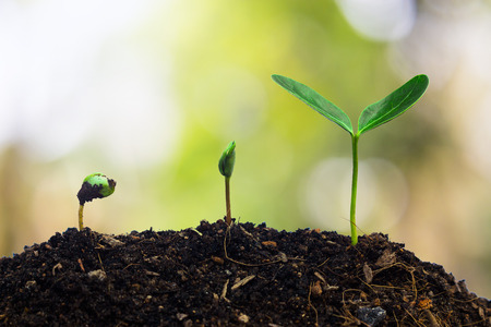 Plants growing in germination sequence on fertile soil with natural green background. Stock Photo