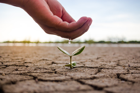 Hand watering the ground and tree barren. Trees small growing nature.