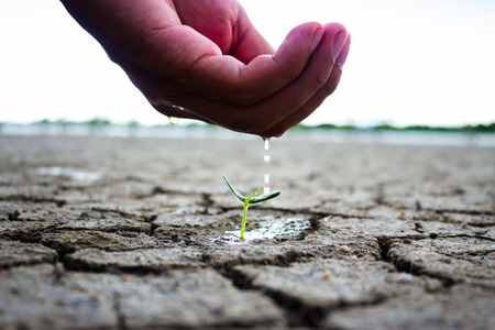 aridness: Hand watering the ground and tree barren. Trees small growing nature.