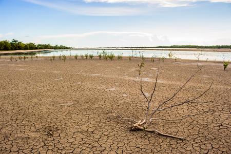 sequias: Sequía fondo árbol muerto.