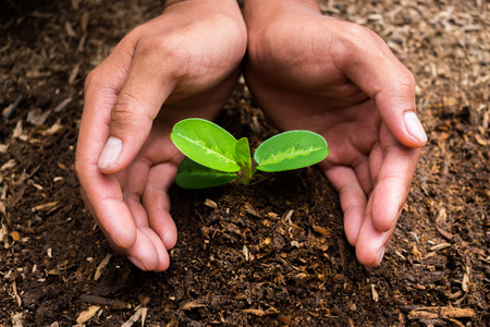 fertile: Plants growing in germination sequence on fertile soil with natural green background. Stock Photo
