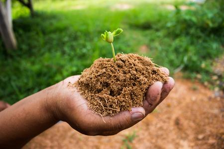 plantando arbol: Mano de árboles que se utilizan en la plantación de árboles árbol de volver a la naturaleza.