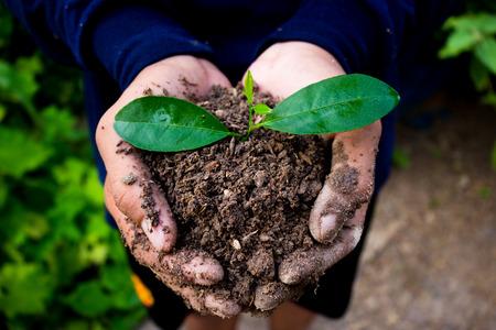 plantando arbol: Mano de la plantación de árboles.