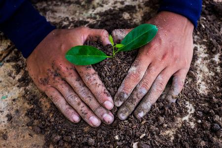 plantando arbol: Mano de árboles que se utilizan en la plantación de árboles.