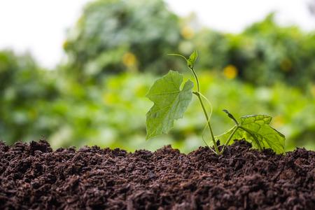 crop growing: Crop growing.
