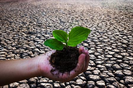 mitigate: Children planting trees to mitigate drought.