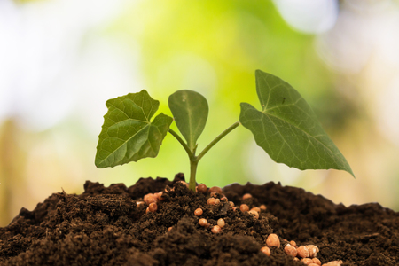 Plant care and fertilize the trees. Stock Photo