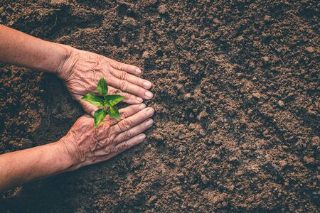 Hand for planting trees back to the forest, Creating awareness for love wild, Wild plant concept.