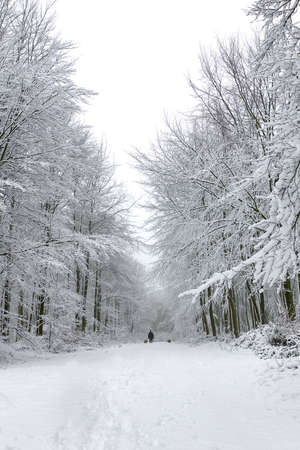 Man walking two dogs in a snow covered forest photo