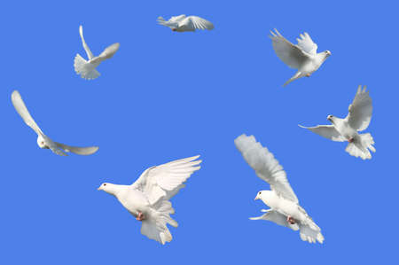 Concept image of Peace - White Doves flying in a circle against a bright blue sky. Stock Photo