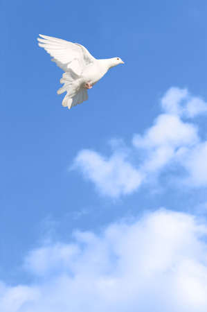 White dove flying across a bright blue cloudy sky. Stock Photo