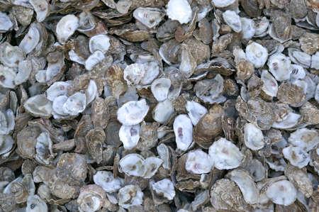 hundreds: Hundreds of empty Oyster shells. Stock Photo