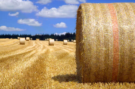 Rural landscape, Hay bales in a field on a bright sunny day. photo
