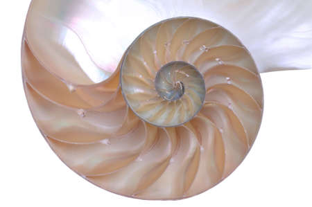 iridescent: Close up of a cut away section from a Nautilus shell.