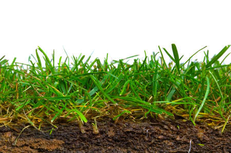 cut grass: Cross section from a piece of turf shot against a white background. Stock Photo