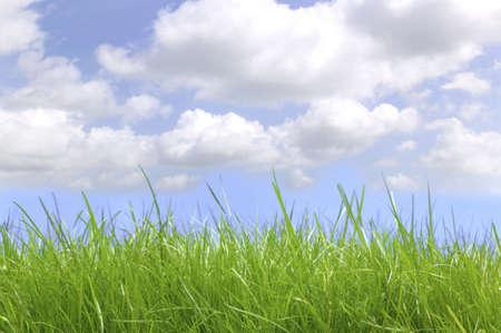 Fresh green grass under a blue cloudy sky, shot at ground level. photo