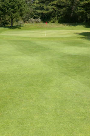 Red flag on a golf putting green Stock Photo - 3995645