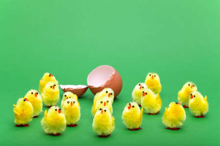 hatched: Freshly hatched toy easter chicks on a green background