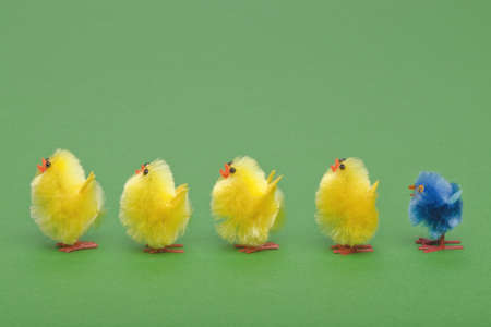 Easter chicks standing in a line, spot the odd one out. Stock Photo - 5955328