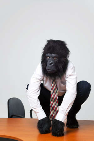 Gorilla businessman in shirt and tie sat on an office desk photo