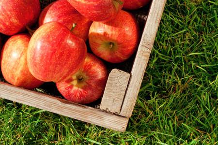 Naturaleza muerta foto de reci�n recolectadas las manzanas rojas en una caja de madera en el c�sped. photo