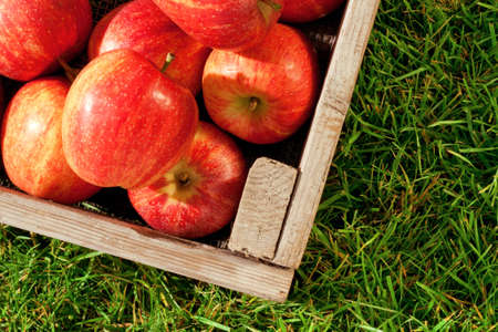 Still life photo of freshly picked red apples in a wooden crate on grass. photo
