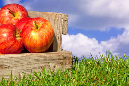 freshly picked: Still life photo of freshly picked red apples in a wooden crate on grass against a blue cloudy sky. Stock Photo