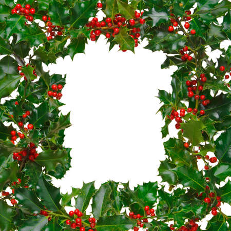 Photo of fresh holly with red berries arranged in a square frame and isolated on a white background.