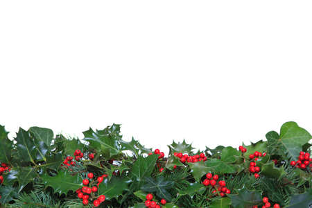 Holly with red berries, ivy and evergreen leaves arranged as a footer against a white background.