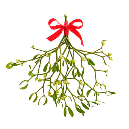 A bunch of Mistletoe tied with a red ribbon bow, isolated on a white background.
