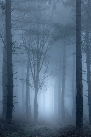 A path leading through woodland on a very foggy morning. Standard-Bild