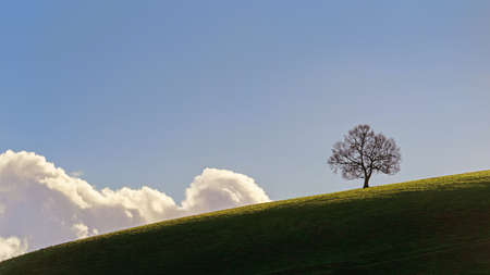Lone Oak tree standing high on a South Downs hill in Hampshire. Standard-Bild