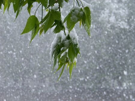 unexpected: Unexpected strong snow attack in the spring Stock Photo