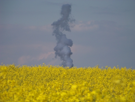 biodiesel plant: Rapeseed flowers field and smoke from the biodiesel production plant