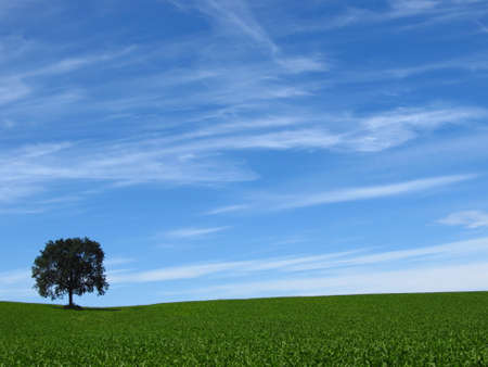 paysage: Green tree growing single in the middle of cultivated fields