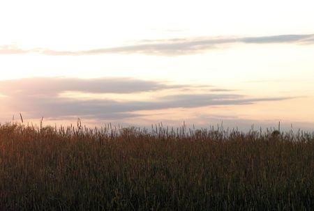 settles: The sun settles behind a field of tall grass.