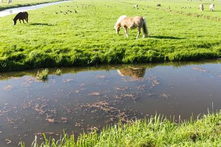 Horse on the farm field photo