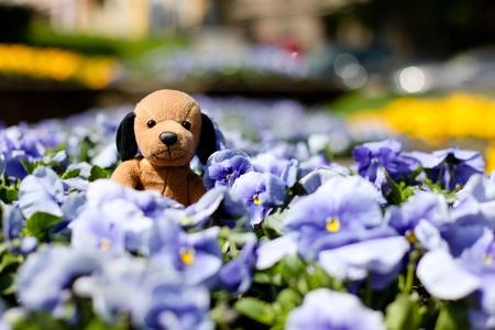 Puppy toy photo