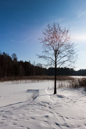Frozen pond in Estonia photo