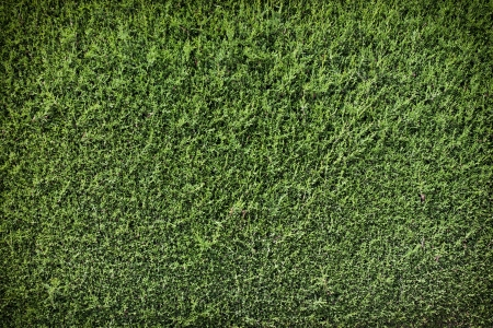 trimmed: Green wall background dark edge Stock Photo