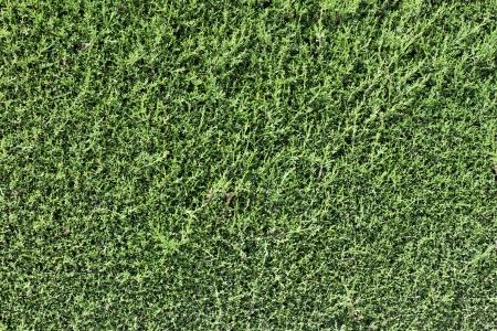 Green wall background dark edge Standard-Bild