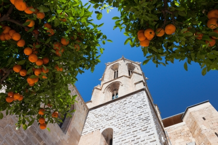 Mandarin orange tree near cathedral