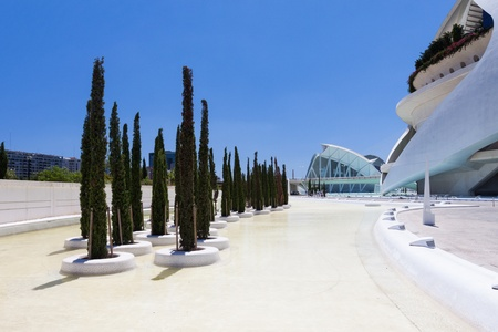 Cypress in Valencia Hemispheric - City of Arts and Science, Spain