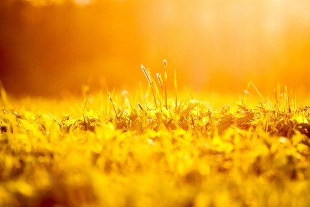 spring grass background at sunset photo