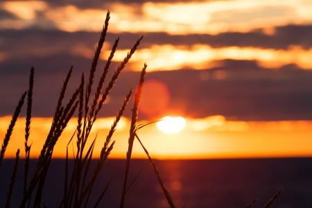 mujer mirando el horizonte: viendo la puesta de sol junto al mar
