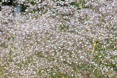 Pretty small white flowers blooming in a garden Stock Photo - 15140858