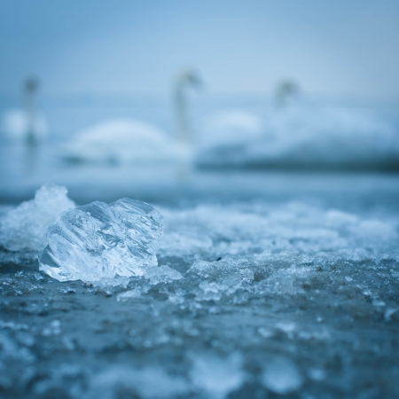 Ice closeup in the sea water with swans silhouette