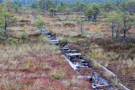 turba: marjal pantano norte de Europa
